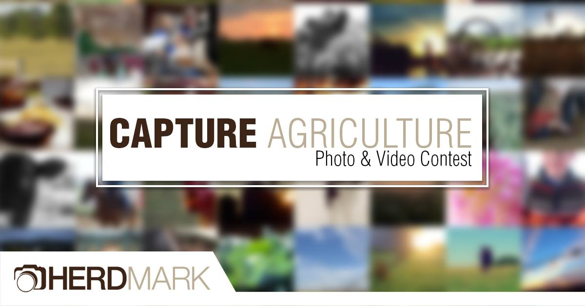 Capture Agriculture: How Will My Entry be Judged?