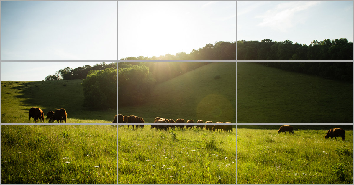 Making better image compositions with the rule of thirds